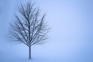 Why Winter Is The Best Tree-Trimming Time